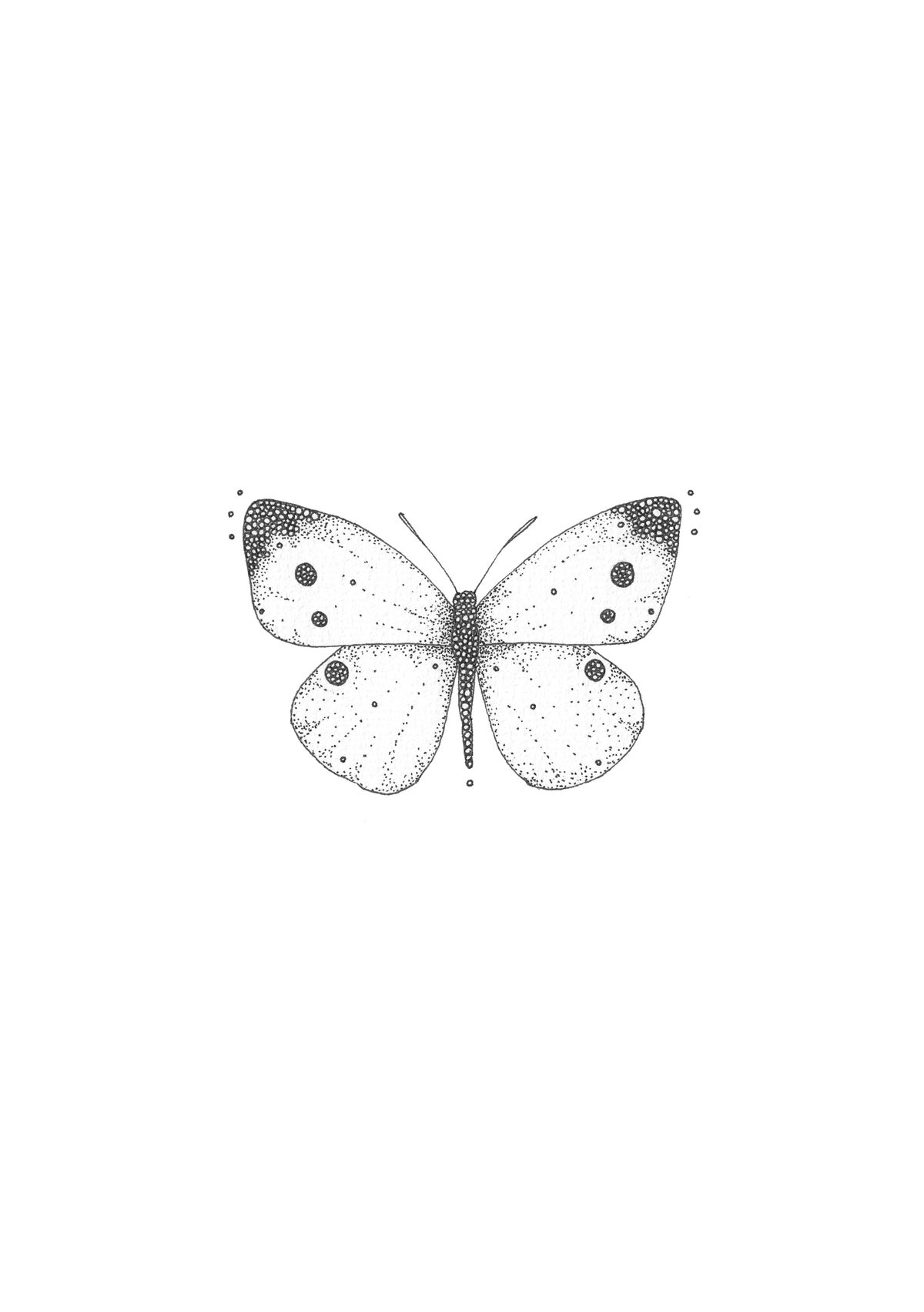 Image of Female Cabbage White