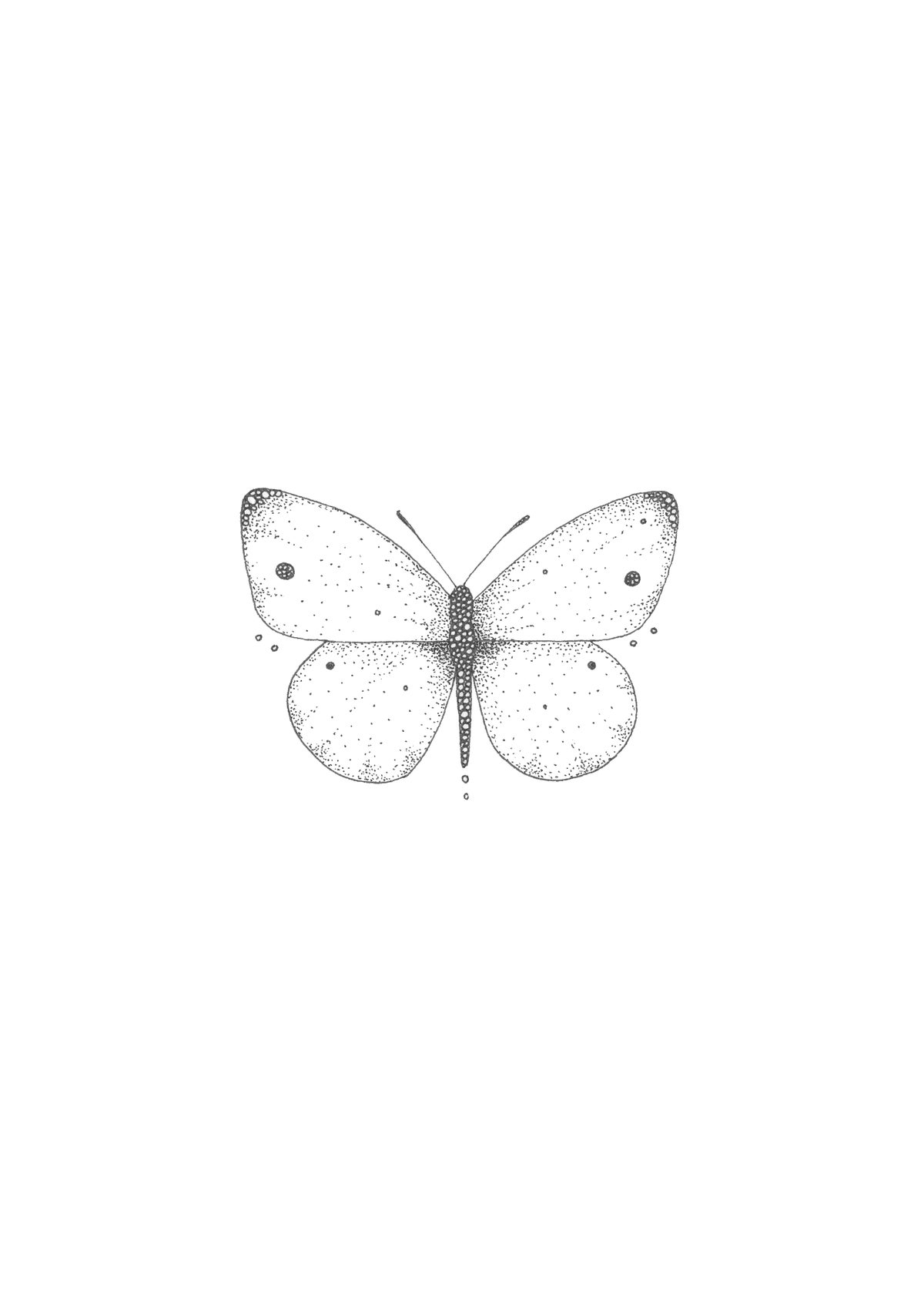 Image of Male Cabbage White