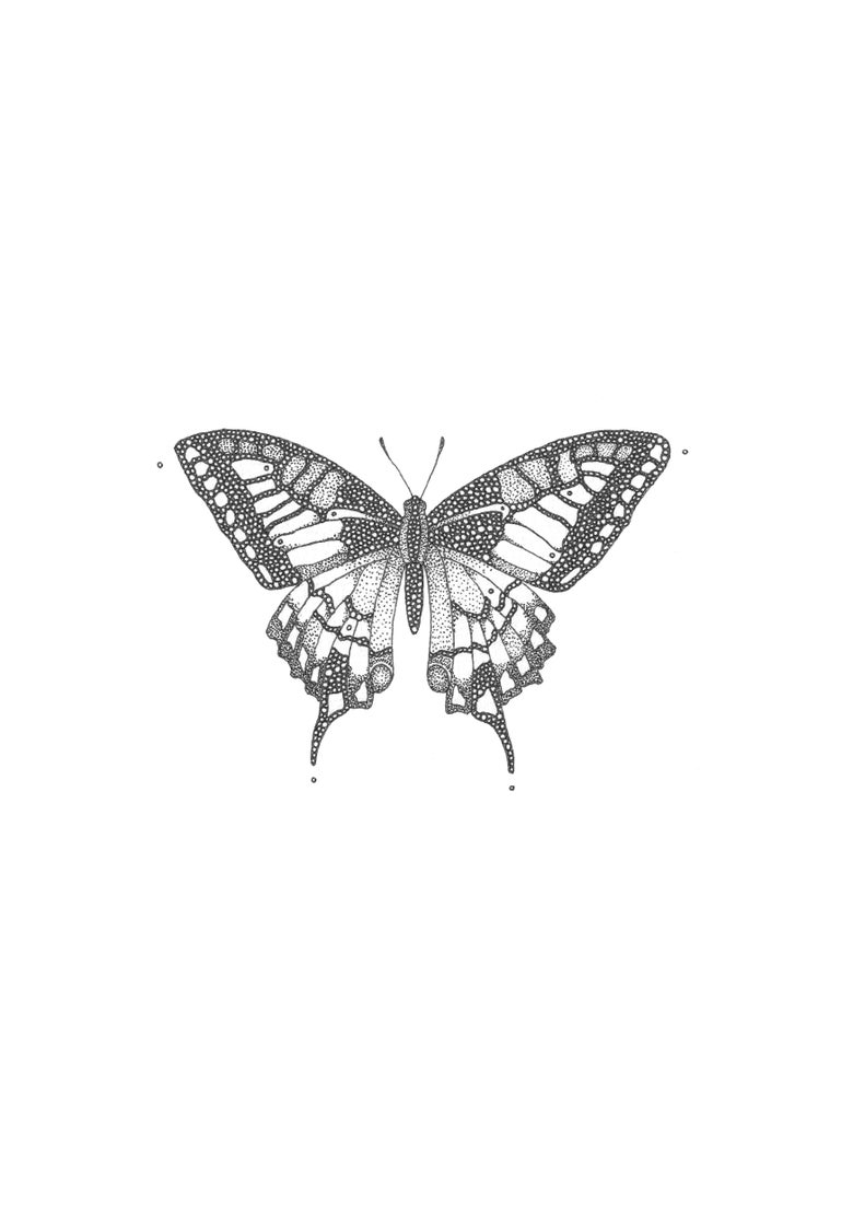 Image of Swallowtail