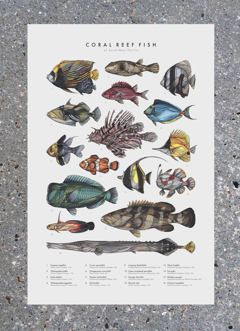 """Image of Poster """"Coral Reef Fish"""""""