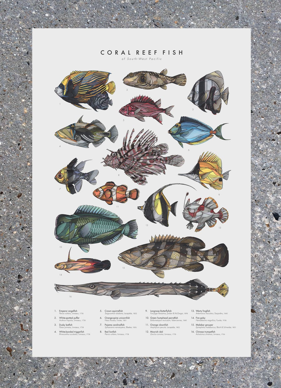 "Image of Poster ""Coral Reef Fish"""