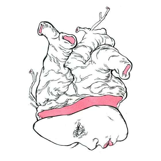 Image of Aorta (Original)