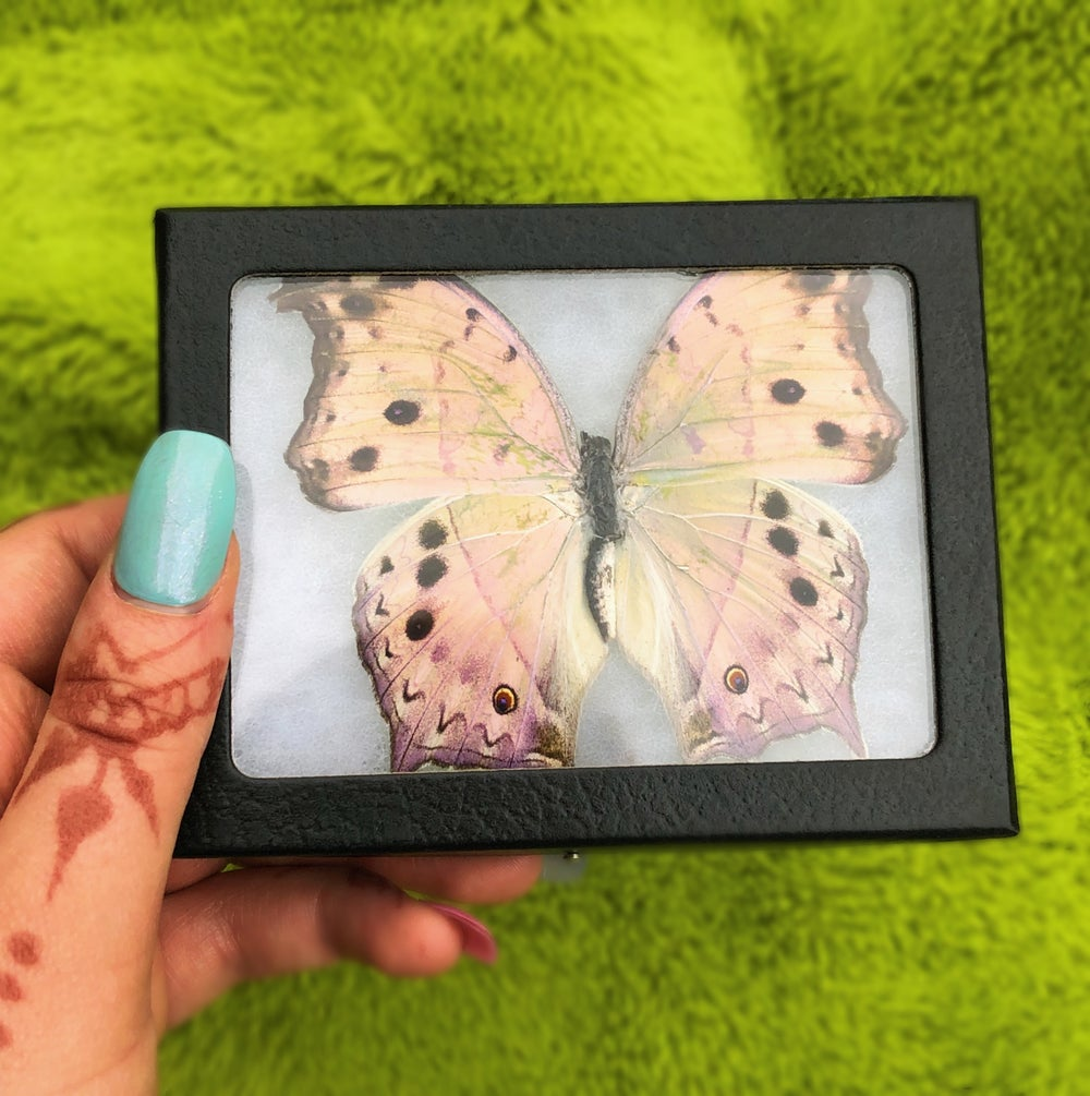 Image of  Real Holographic Butterfly (African Salamis Parhassus) | CRUELTY FREE