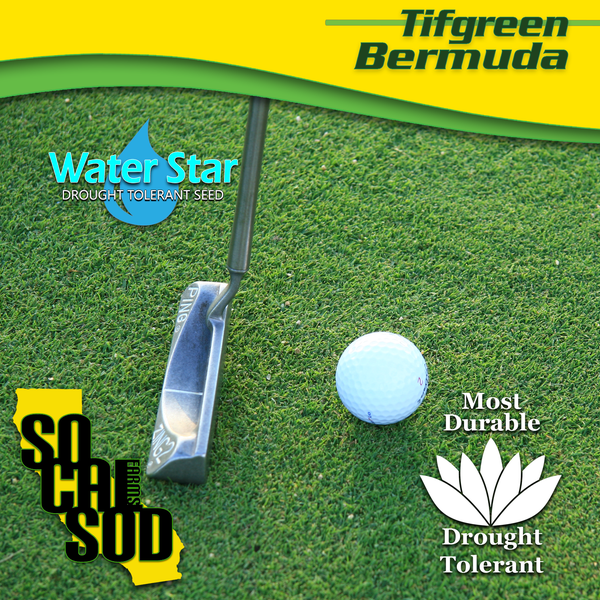 Image of TIFGREEN 328 BERMUDA - (Warm Weather Grass)