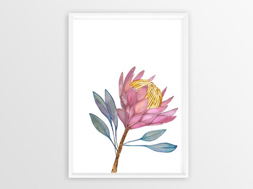 Image of King Protea