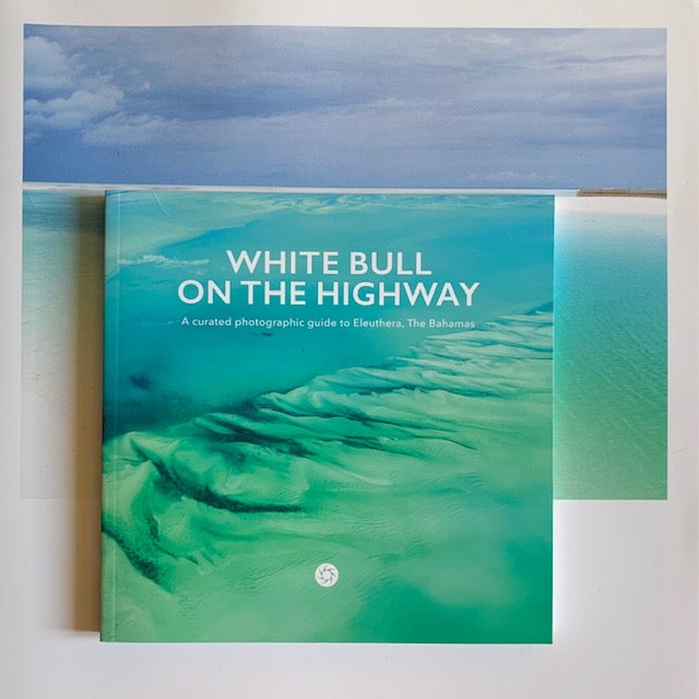 Image of White Bull on the Highway