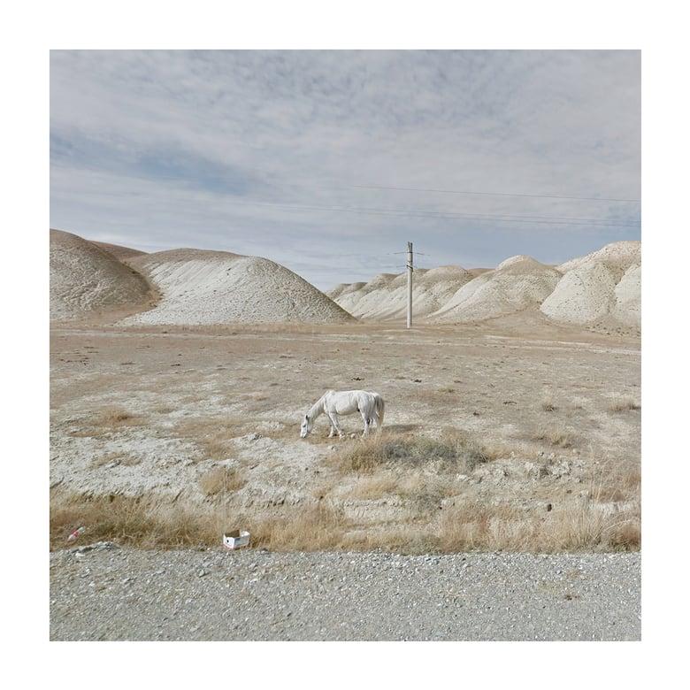 Image of White Horse, Kyrgyzstan
