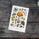 Image of WILD FOOD 3 & 4 PRINTS