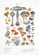 Image of EDIBLE SHROOMS I