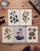 Image of WILD BERRY POSTCARD SET