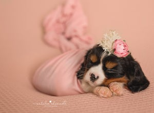 Image of Paw'traiture Fur baby Sessions {from}
