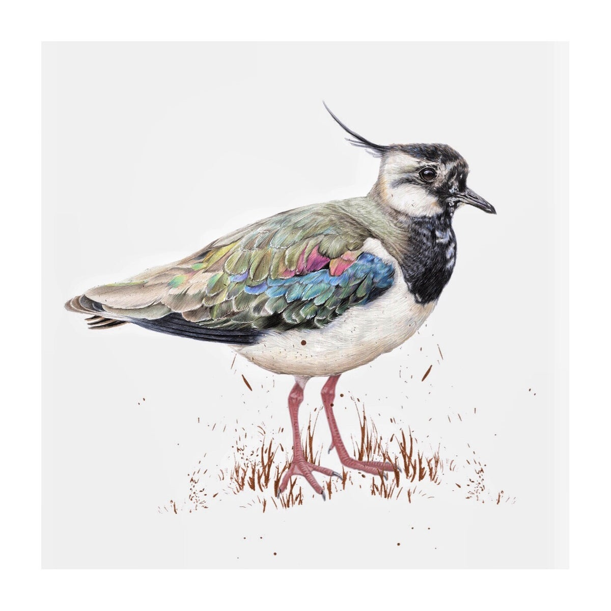 Image of 'Lapwing' Limited Edition Print (Hand Embellished)