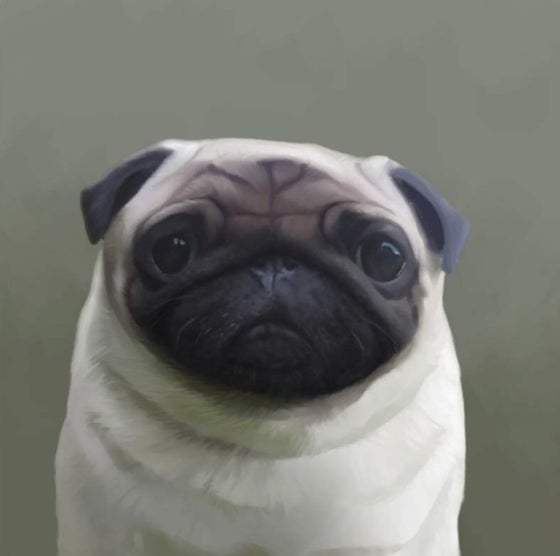 Image of Pugly