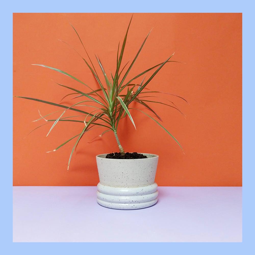 Image of LUMPY PLANTER