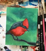 Image of Vermillion Flycatcher study