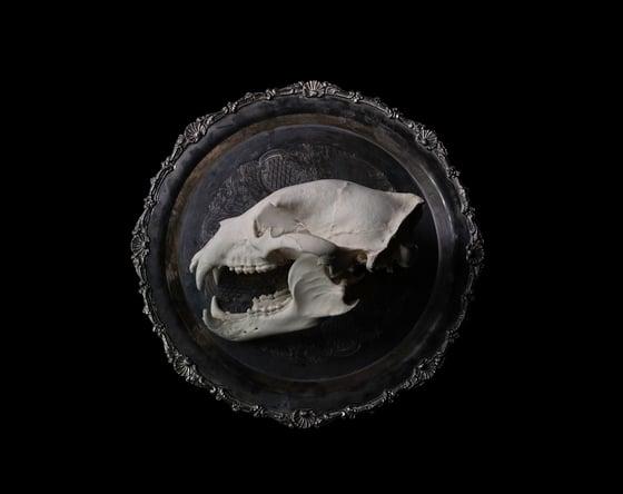 Image of 'Black Bear' - Remnants Series  - Limited Run Print