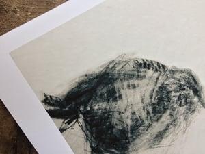 Image of St. Kildan Wren