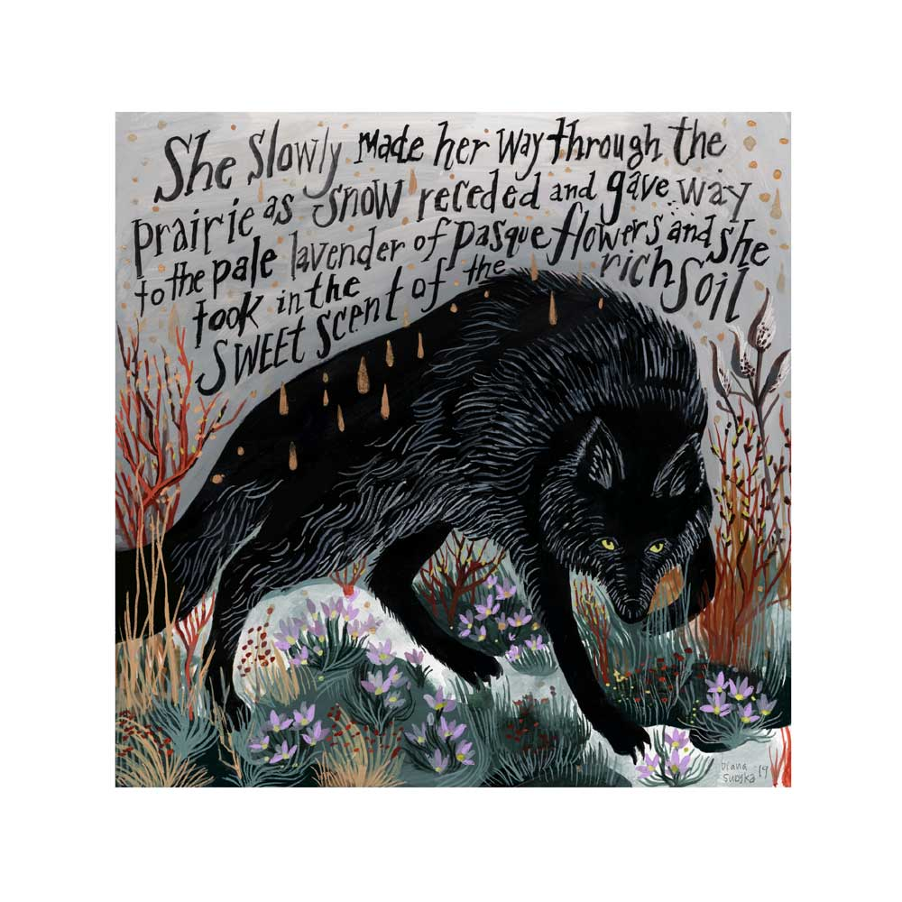Image of Black Wolf and Pasque Flowers - 9 x 9 inch Gicleé (archival inkjet) Print