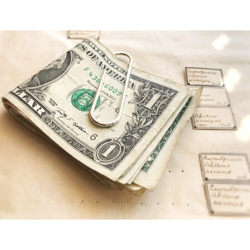 Image of Paper Money Clip