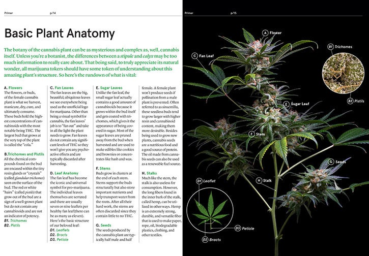 Image of Green: A Field Guide to Marijuana