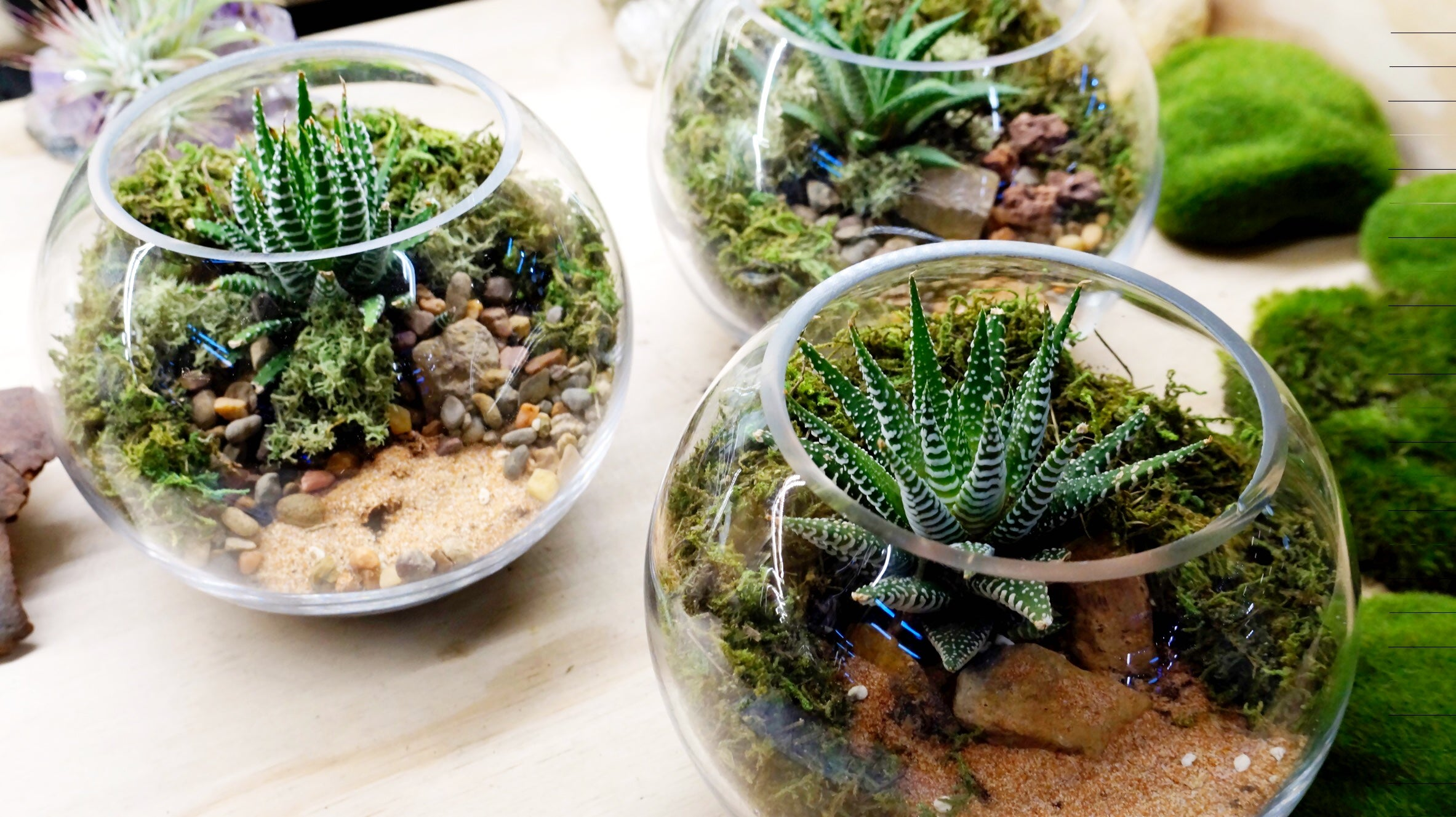 Terrarium Laboratory Home