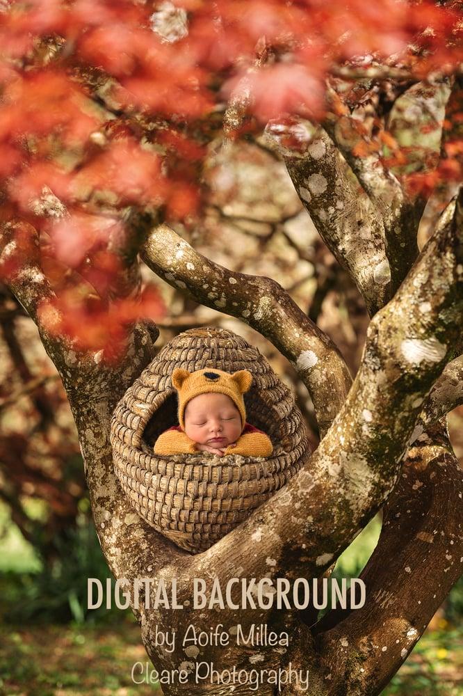 Image of newborn beehive digital backdrop , regular jpeg backdrop, no layers
