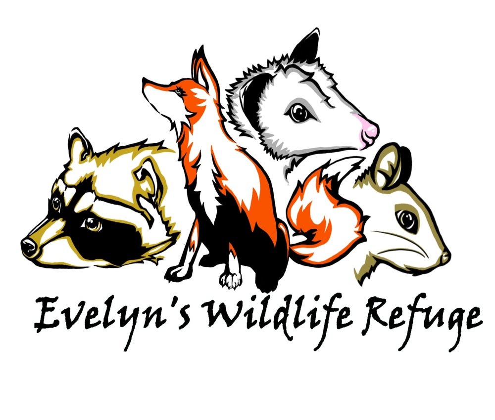 "Image of ""EVELYNS WILDLIFE REFUGE"" GROUND CUSTOM DARK OR MEDIUM"