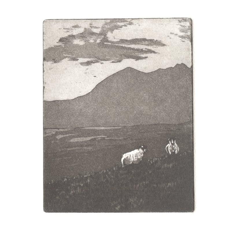 Image of Two sheep. Fine art print. 5.5cm x 7cm