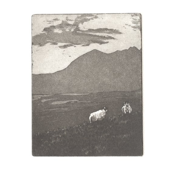 Image of Two sheep. Fine art print. 5.5cm x 7cm
