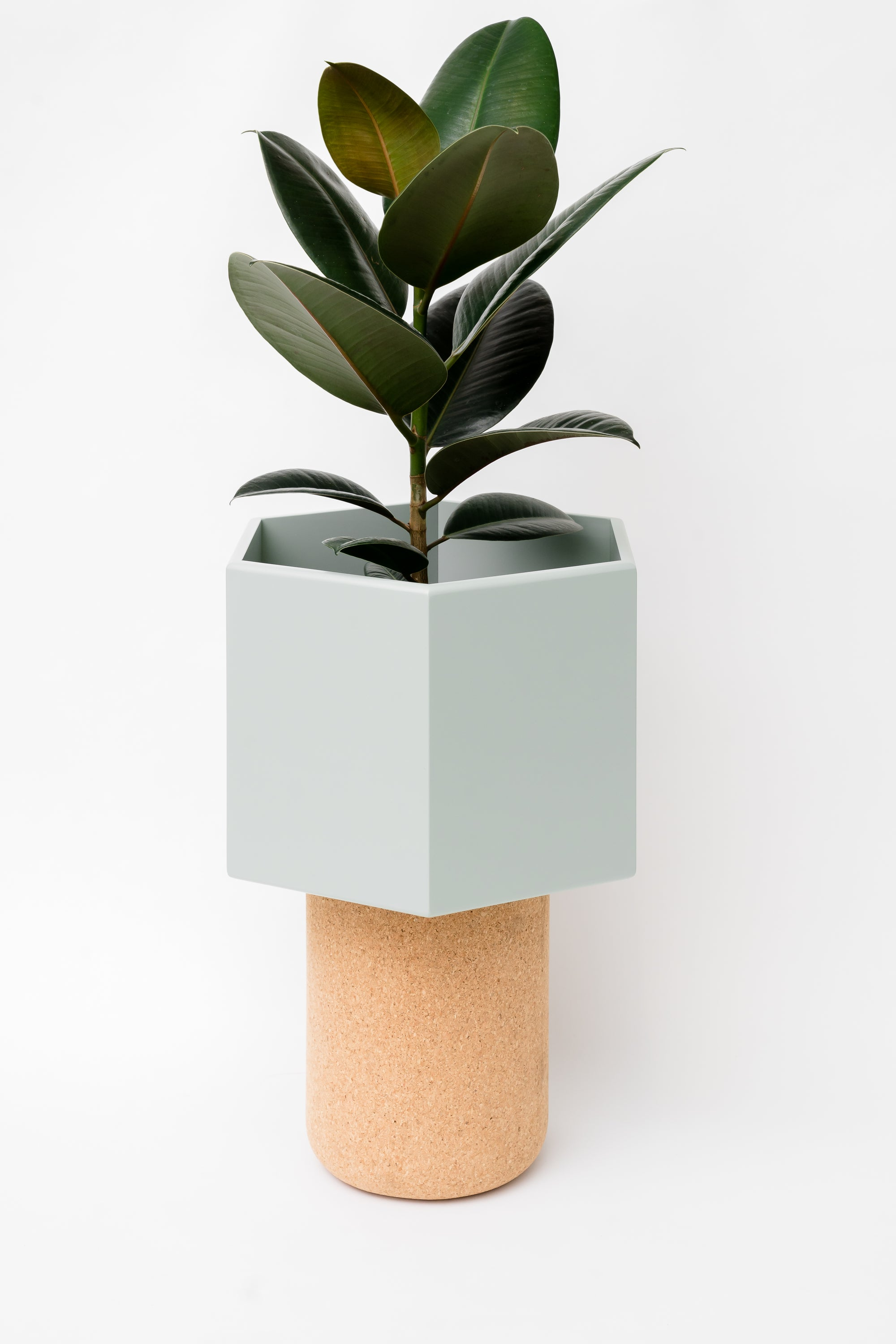 Image of Plant Pot - M