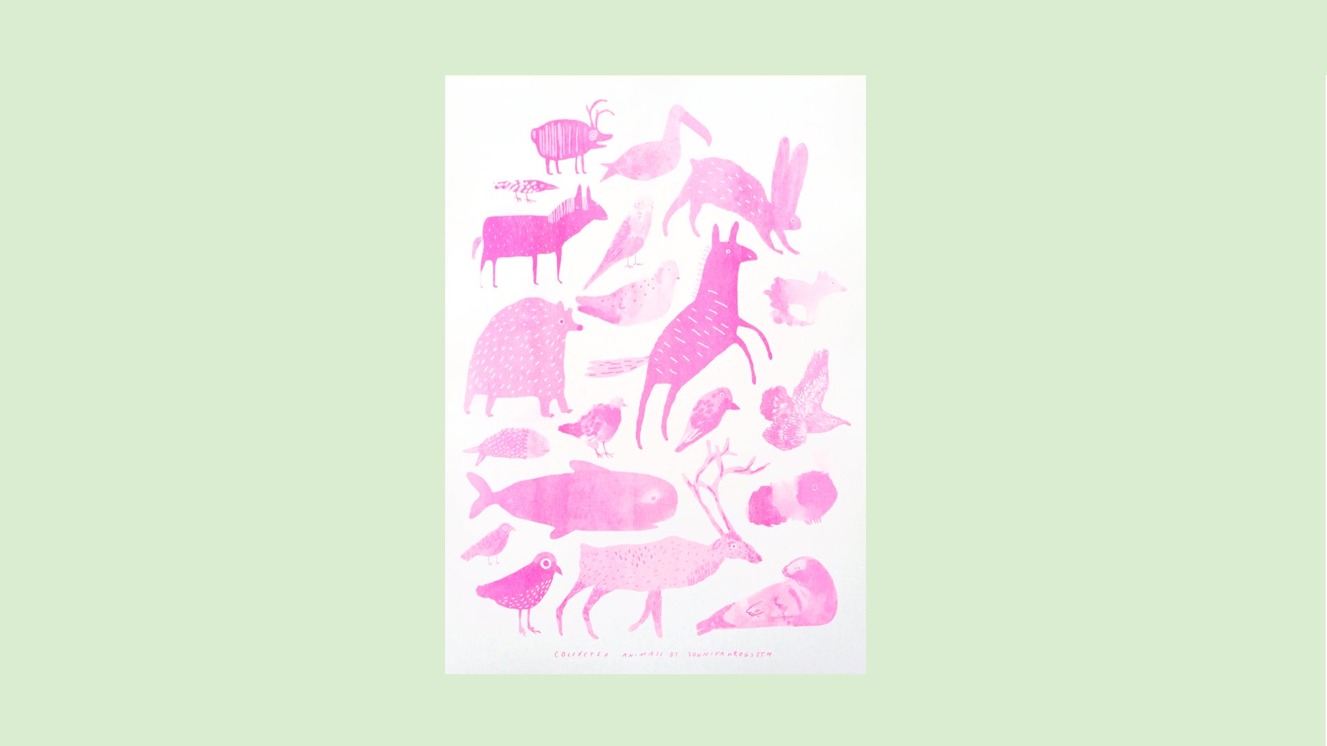 Image of Collected Animals 2019 Fluorescent pink