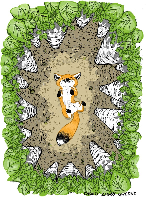 Image of Happy Fox in Birch trees colour print