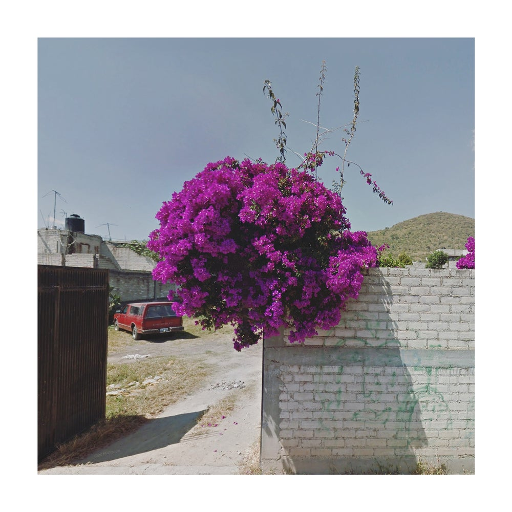 Image of Bougainvillea, Mexico | Limited Edition