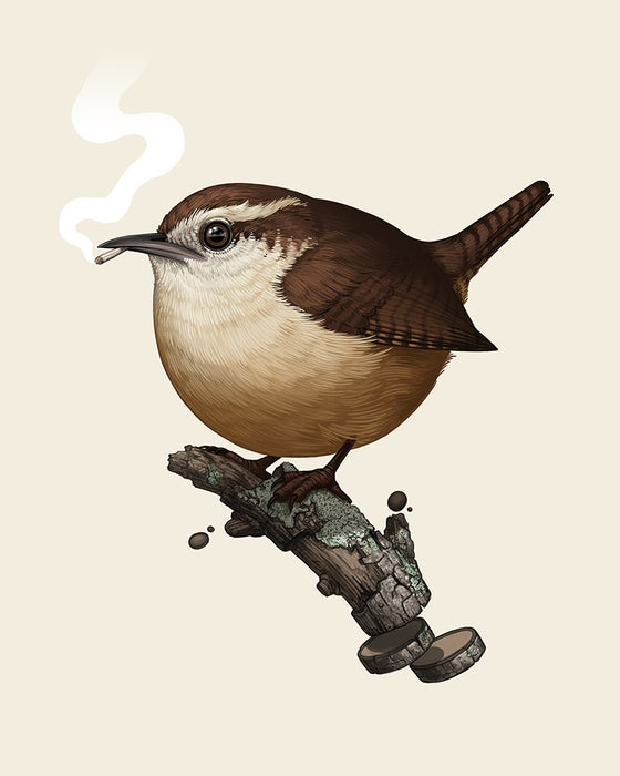 Image of Carolina Wren (variant)