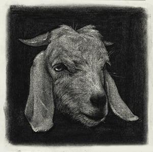 Image of Goat - Drawing *Framed*