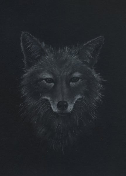 Image of Coyote Study - Drawing on Paper