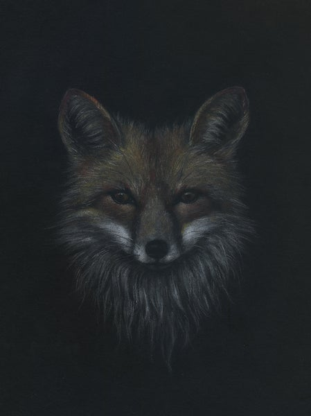 Image of Red Fox Study - Drawing on Paper