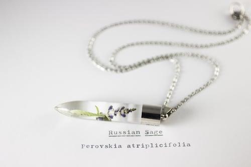Image of Russian Sage (Perovskia atriplicifolia) - Medium #1