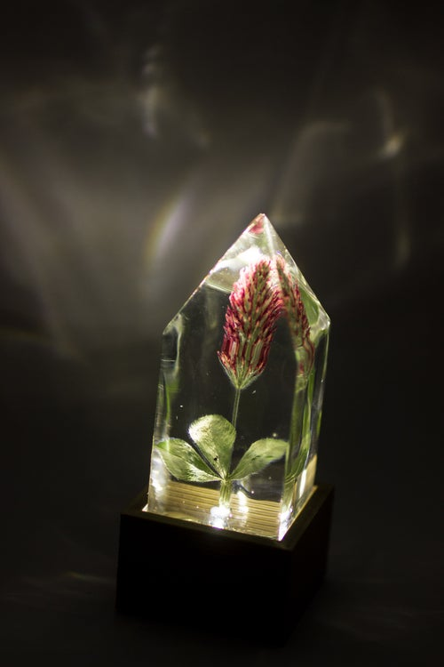 Image of Crimson Clover (Trifolium incarnatum) - Floral Prism Nightlight
