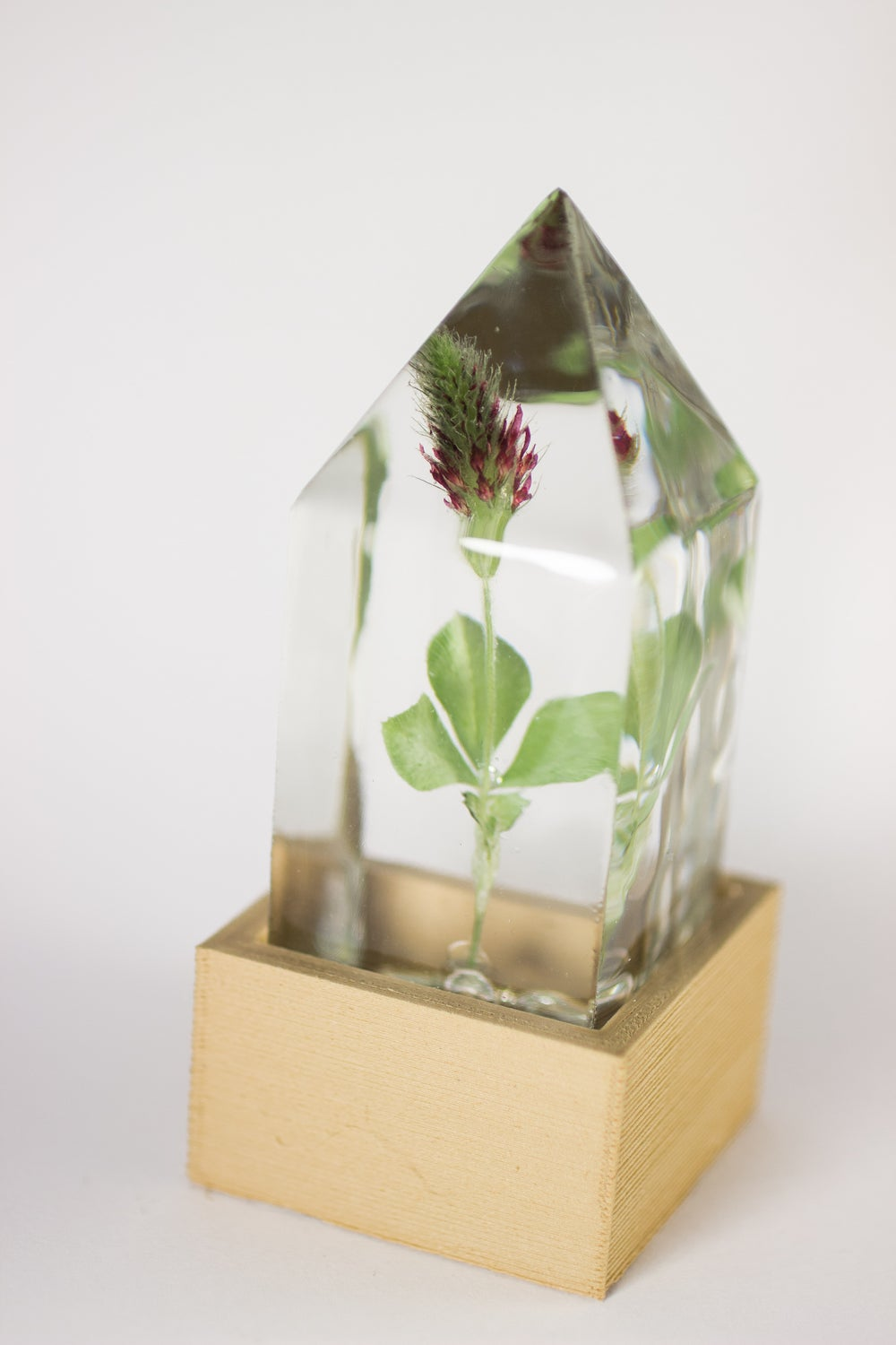 Image of Crimson Clover (Trifolium incarnatum) - Floral Prism Nightlight #2