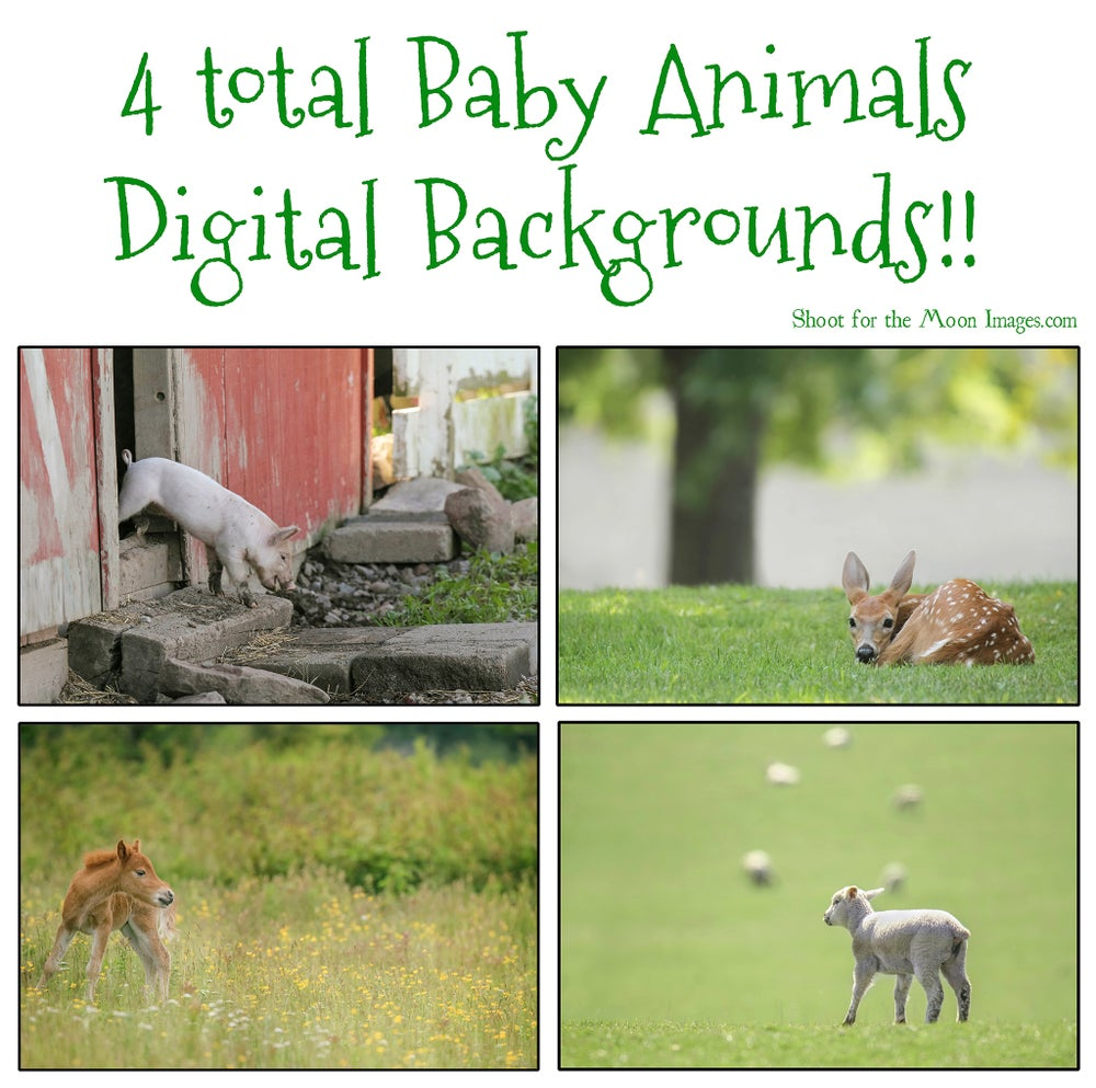 Image of Baby Animals Digital Backgrounds