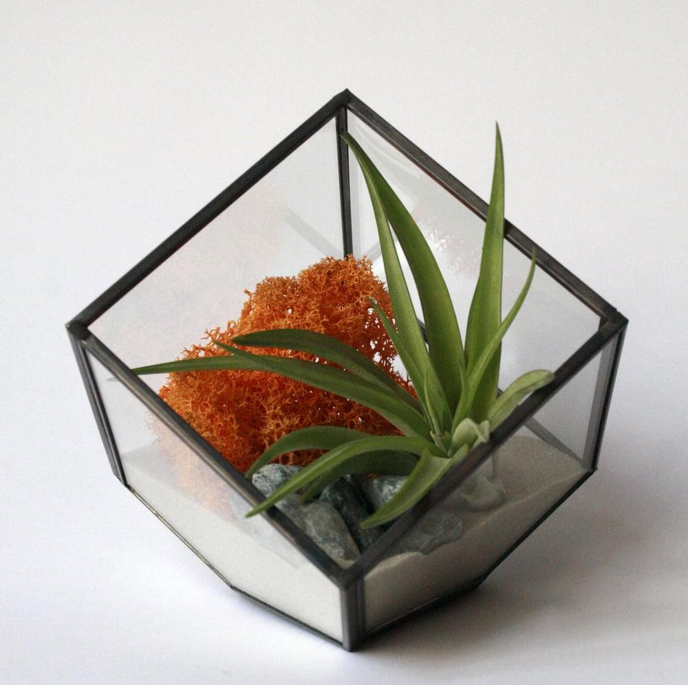 Image of terrario geometric Cube
