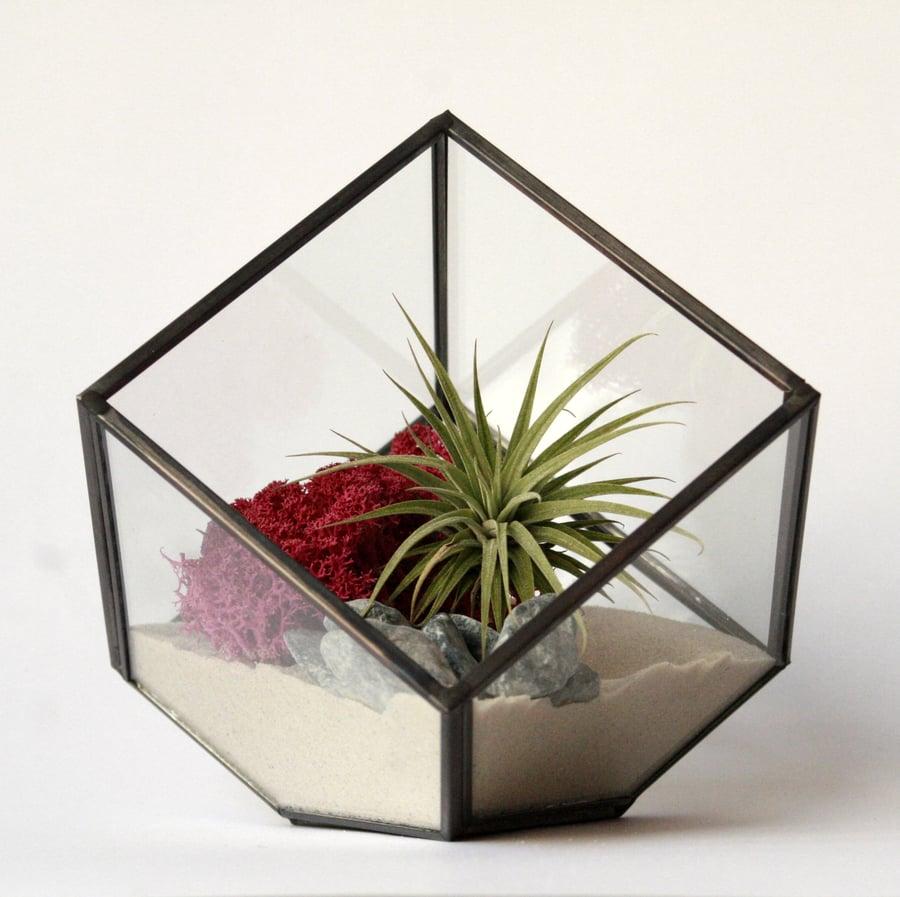 Image of terrario geometric ionantha