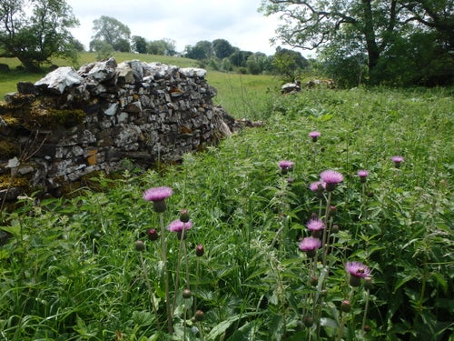 Image of National Meadows Open Day at Bell Sykes Farm - Saturday 6th July