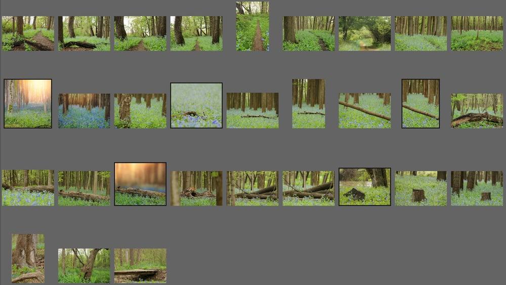 Image of Bluebells Backgrounds Bundle
