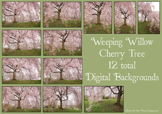 Image of Weeping Willow Cherry Tree Digital Backgrounds