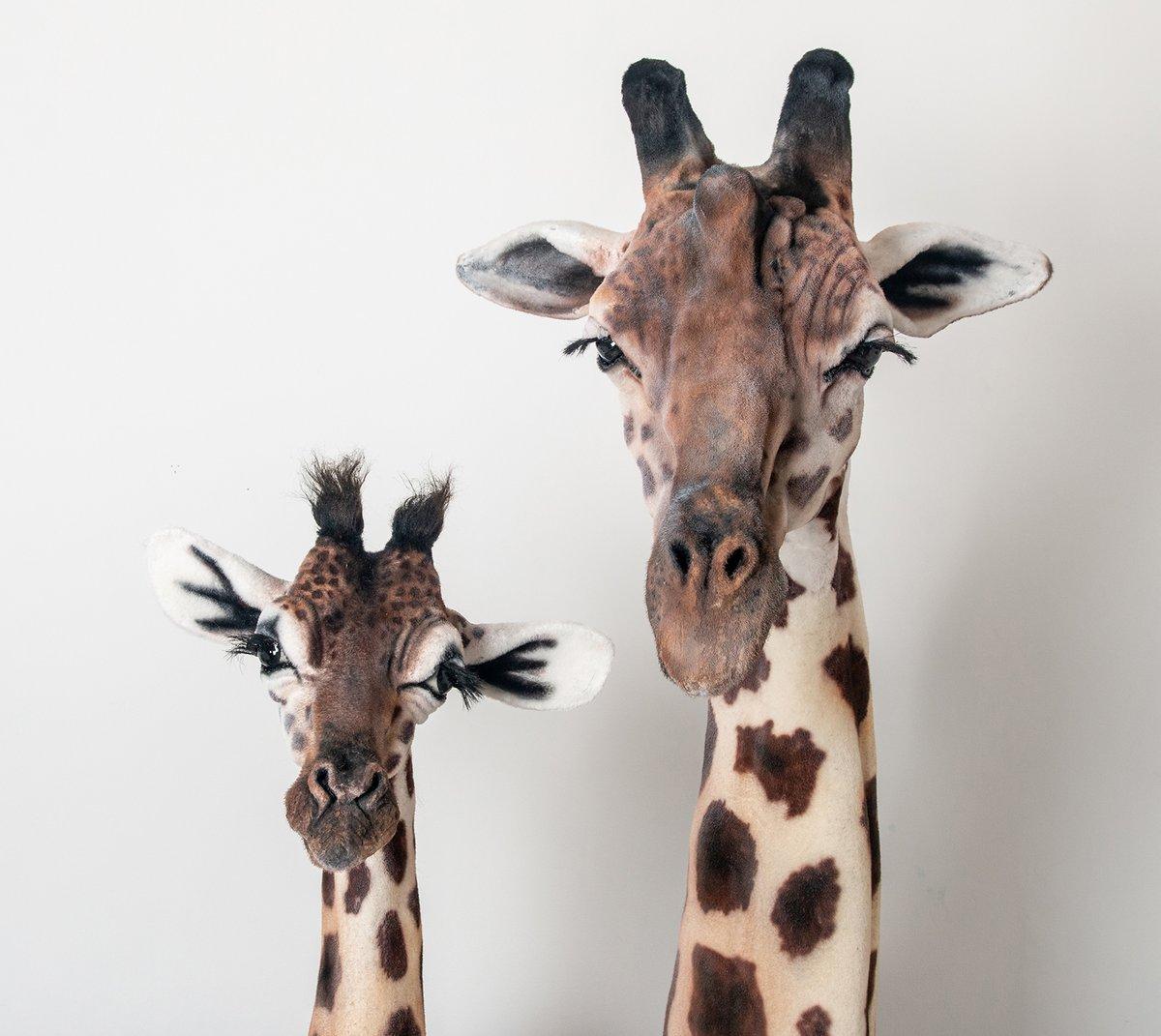 Image of Baby Giraffe Sculpture