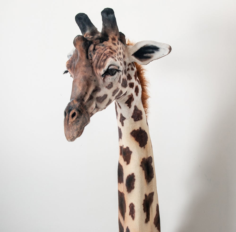 Image of Giraffe Sculpture