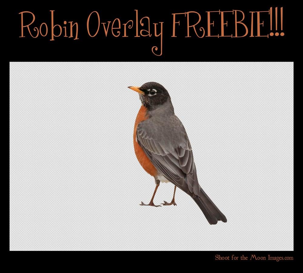 Image of Robin Overlay FREEBIE