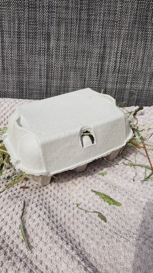 Image of Recycled egg box stuffed with forage